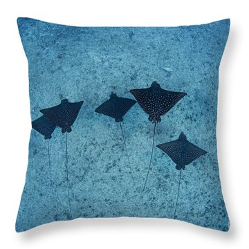 Spotted Eagle Rays Throw Pillow by Dave Fleetham - Printscapes