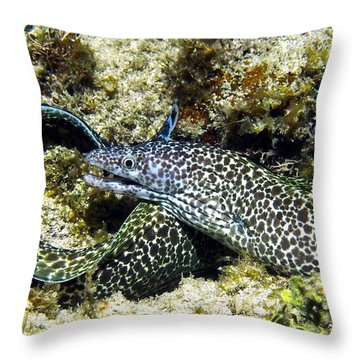 Spotted Moray Eel Throw Pillow by Amy McDaniel