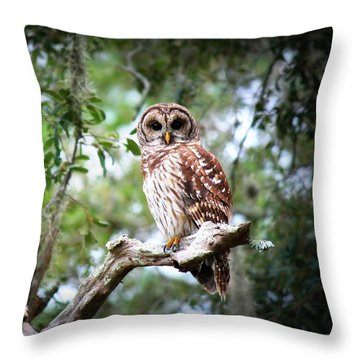 Spotted Owl II Throw Pillow