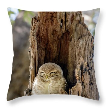 Spotted Owlet Throw Pillow