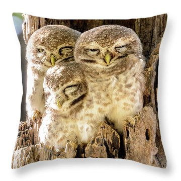 Spotted Owlets Throw Pillow
