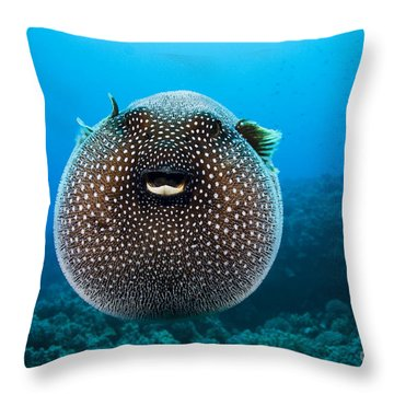Spotted Pufferfish Throw Pillow by Dave Fleetham - Printscapes