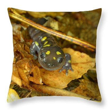 Spotted Salamander Throw Pillow