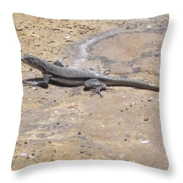 Lizard Basking In The Sun Throw Pillow