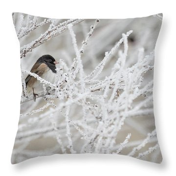 Spotted Towhee In Winter Throw Pillow