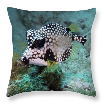 Throw Pillow featuring the photograph Spotted Trunkfsh by Jean Noren