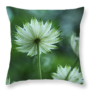 Botanica .. Spray Of Light Throw Pillow