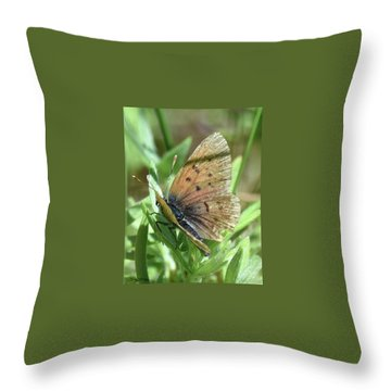 Throw Pillow featuring the photograph Spreading Its Wings by Sally Sperry