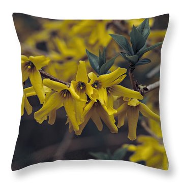 Throw Pillow featuring the photograph Spring 2016 8 by Cendrine Marrouat