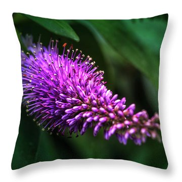 spring beautiful flowers callistemon in subtropics of Russia Throw Pillow