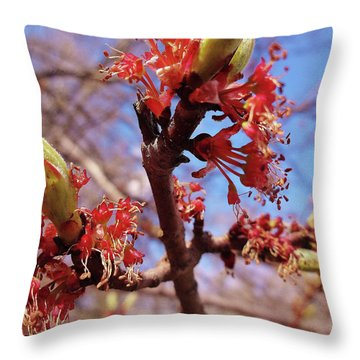 Spring Bloom #1 Throw Pillow by Jason Williamson