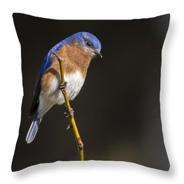 Spring Bluebird Throw Pillow