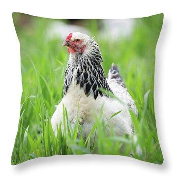 Spring Checken Throw Pillow