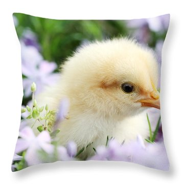 Spring Chick Throw Pillow by Stephanie Frey