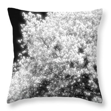 Spring Day In Barrie Ontario Canada 2017-05-15 Two  Throw Pillow