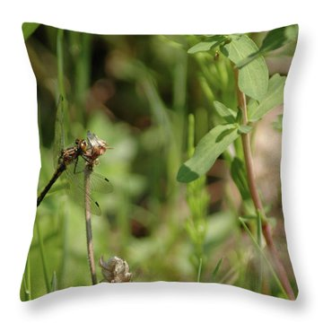 Throw Pillow featuring the photograph Spring Dragonfly by LeeAnn McLaneGoetz McLaneGoetzStudioLLCcom