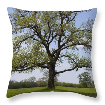 Spring Emerges Throw Pillow