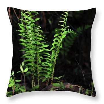 Throw Pillow featuring the photograph Spring Ferns by Skip Willits