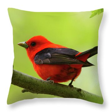 Spring Flame - Scarlet Tanager Throw Pillow