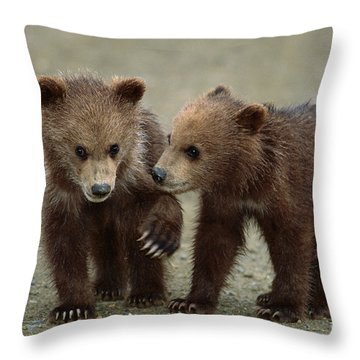 Spring Grizzly Cubs In Denali Throw Pillow