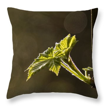 Spring Has Sprung - 365-27 Throw Pillow by Inge Riis McDonald