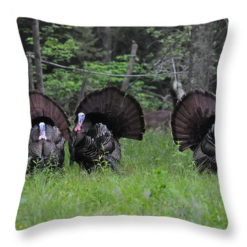 Spring In The Air Throw Pillow by Todd Hostetter
