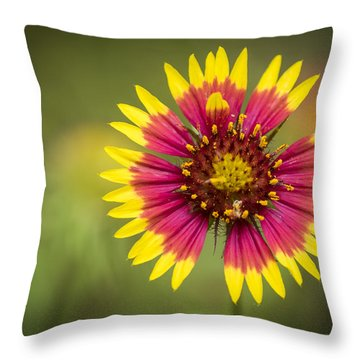 Spring Indian Blanket Throw Pillow