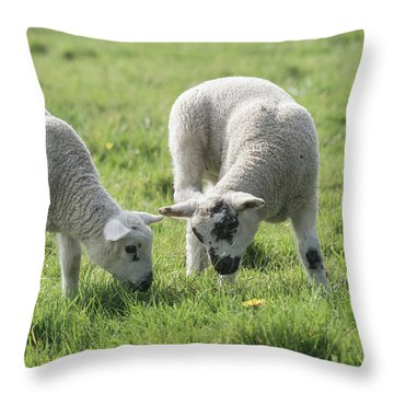 Throw Pillow featuring the photograph Spring Lambs by Scott Carruthers