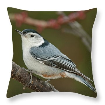 Throw Pillow featuring the photograph Spring Nuthatch 2017 by Lara Ellis