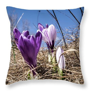 Spring On Bule Throw Pillow