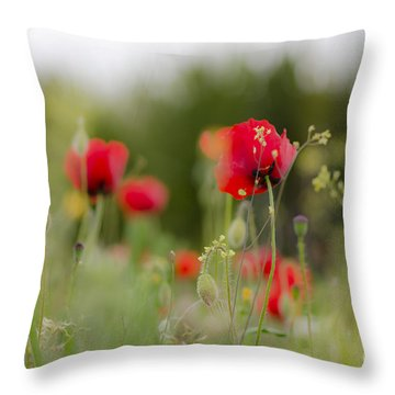 Spring Poppies  Throw Pillow by Perry Van Munster