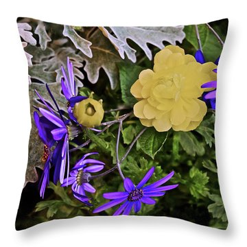 Throw Pillow featuring the photograph Spring Show 18 Persian Buttercup With Florist's Cineraria 2 by Janis Nussbaum Senungetuk