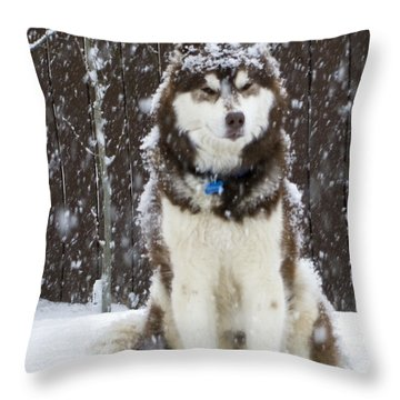Spring Snow Throw Pillow by Rhonda McDougall