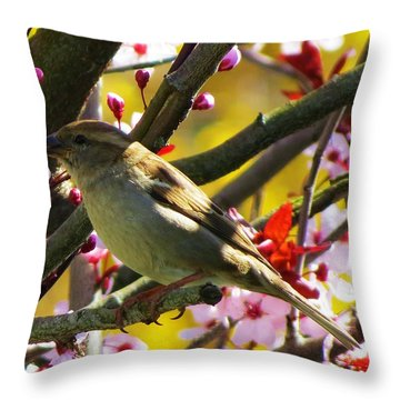 Spring Sparrow Throw Pillow
