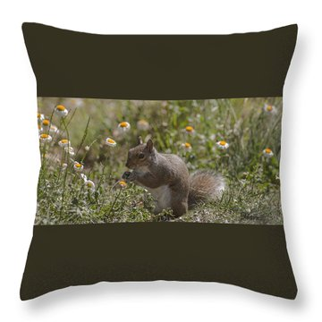 Spring Squirrel Throw Pillow by Diane Giurco