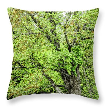 Spring Time By The River Throw Pillow