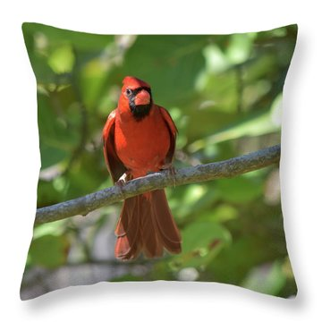 Spring Training Cardinal Throw Pillow