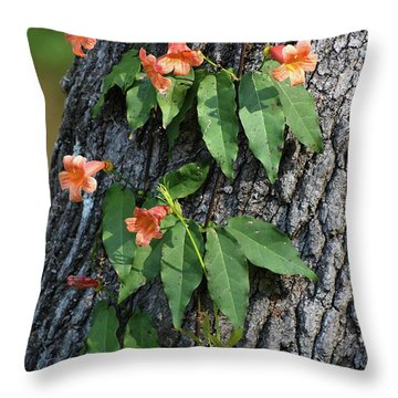 Throw Pillow featuring the photograph Vinery by Skip Willits