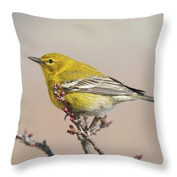 Throw Pillow featuring the photograph Spring Warbler 1 2017 by Lara Ellis