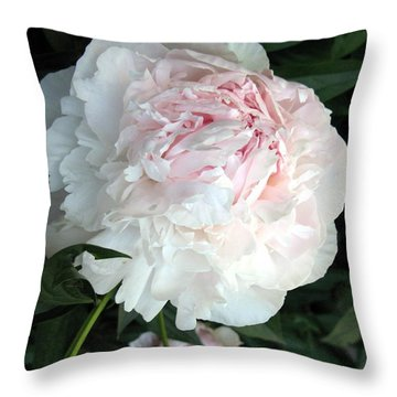 Throw Pillow featuring the photograph Springs Peony by Carol Sweetwood