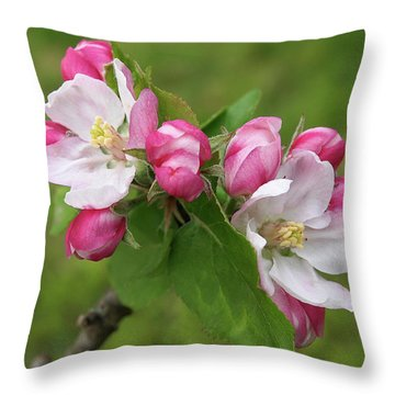 Springtime Apple Blossom Throw Pillow by Gill Billington