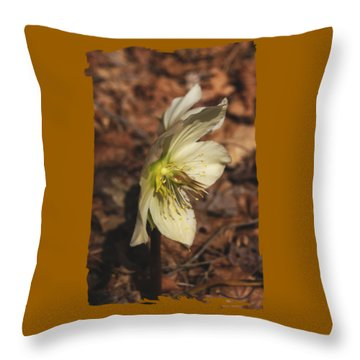 Springtime Helleborus Throw Pillow