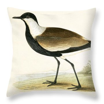 Spur Winged Plover Throw Pillow by English School