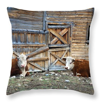 Squires Herefords By The Rustic Barn Throw Pillow by Karon Melillo DeVega