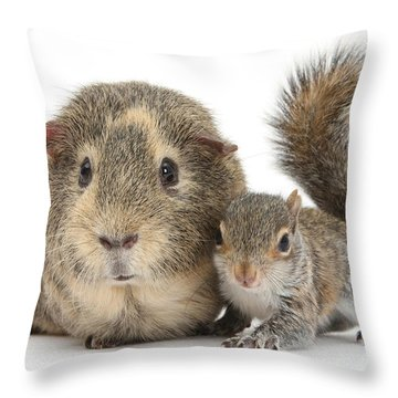 Squirrel And Guinea Throw Pillow