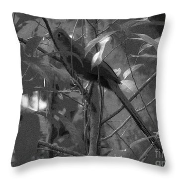 Squirrel Cuckoo  Throw Pillow