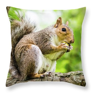 Squirrel Eating On A Branch Throw Pillow