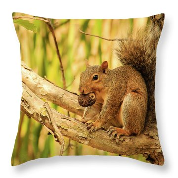 Squirrel In A Tree In The Marsh Throw Pillow
