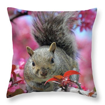 Throw Pillow featuring the photograph Squirrel In Apple Blossoms by Doris Potter