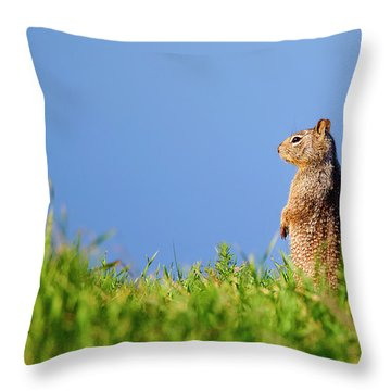 Squirrel Look-out Throw Pillow